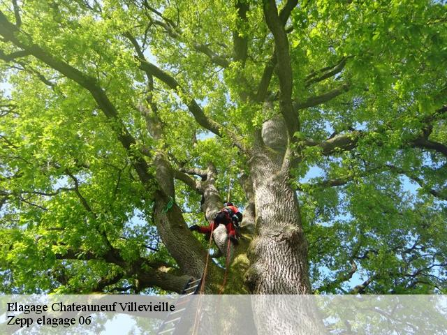 Elagage  chateauneuf-villevieille-06390